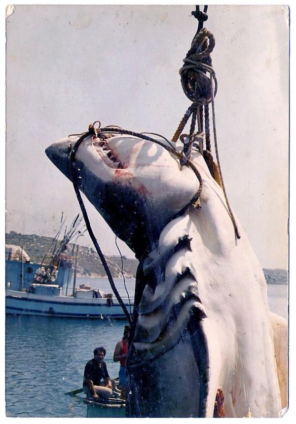 Photo Credit John Abela 7.14 metri per un peso stimanto di circa 3000 kg.