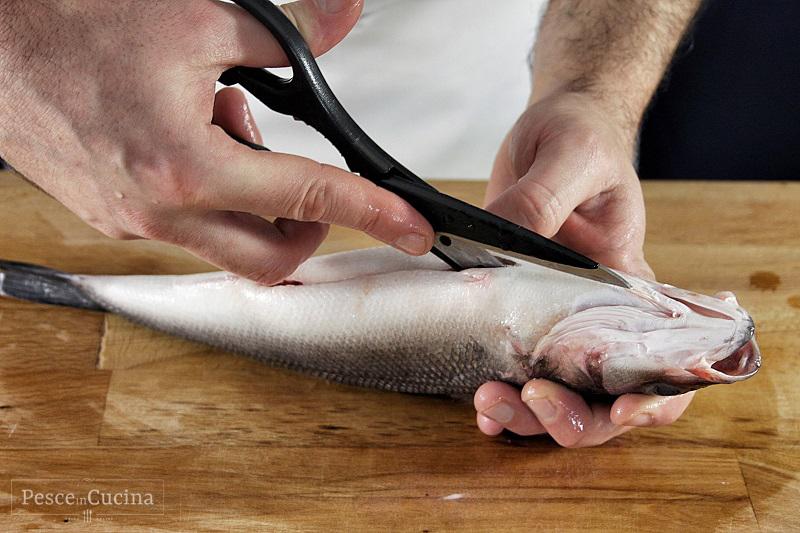la-pulizia-del-pesce-eviscerare-dal-ventre-fase-2