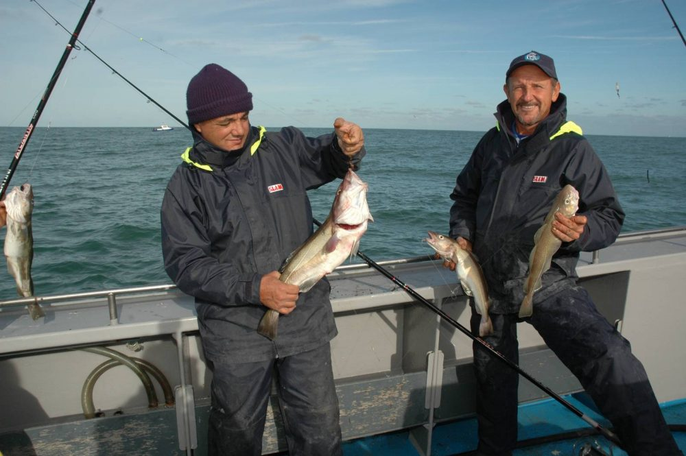 Il cod o merluzzo classico pesce dei mari del nord