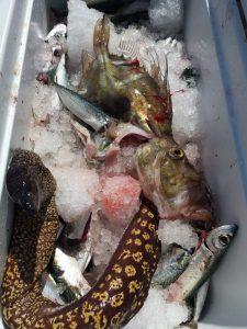 pescata a bolentino medio profondo