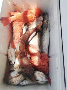 La pesca di profondità è una tecnica di pesca molto avvincente da effettuarsi nel periodo estivo o comunque con mare prettamente calmo solo nell'uscita di intera giornata.. Le poste sono distanti e l'uscita prevede un supplemento per il consumo carburante.